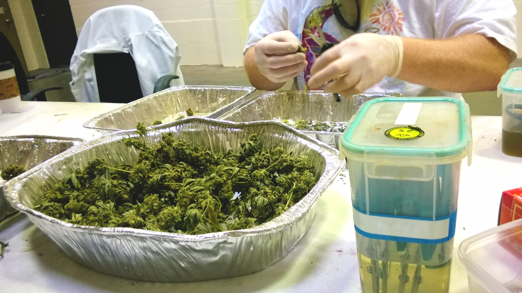 how to land a job in the marijuana industry